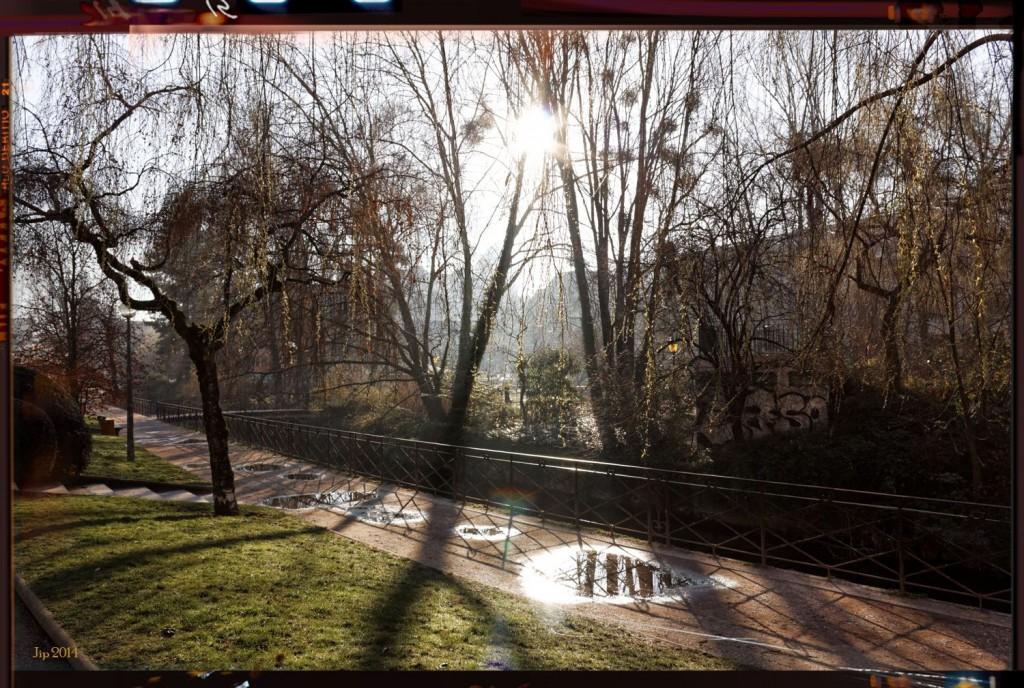 Thiou arbres soleil